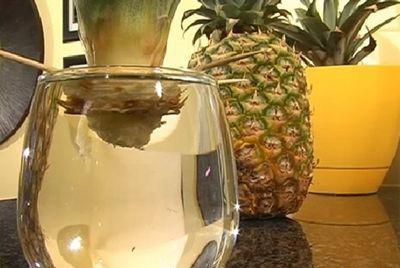 神奇的再生,买菠萝的时候顶花留着哦! - 平凡刺桐 - 平凡刺桐博客