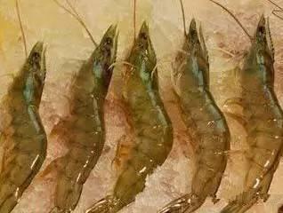 下面的海鲜你也不一定全认识 - 个旧锡安翰墨艺术协会 - 雲南個舊錫安翰墨藝術協會