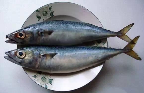 海鲜 【宾尼艇好玩】史上最全海鲜大全,以后不怕不认识海鲜了!