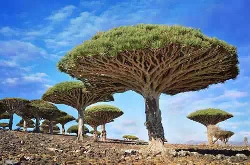 万紫千红、千姿百态: 世界各地的奇花异树