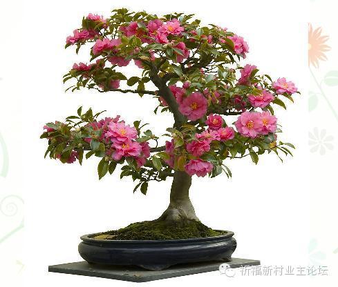[转] 花都是浇死的,祈福老园艺师教你哪种花多久浇一次水 - 小舟 - 小舟的博客