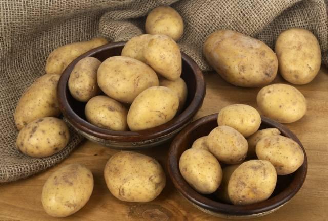 发芽的土豆是不能吃的