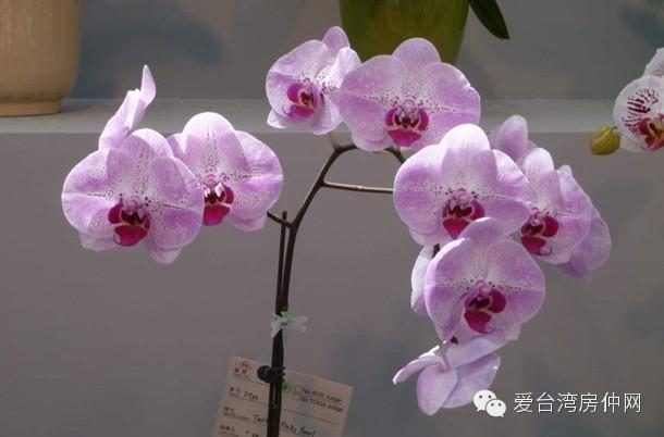 台湾国际兰花展—太齐全了,值得收藏!