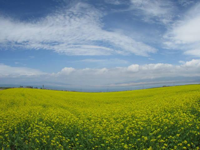 最美中国 - 夏季草原 - 夏季草原的博客