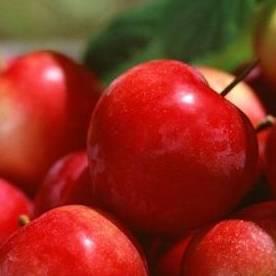 【食疗】春天苹果什么时候吃最好?答案竟然是…惊呆了