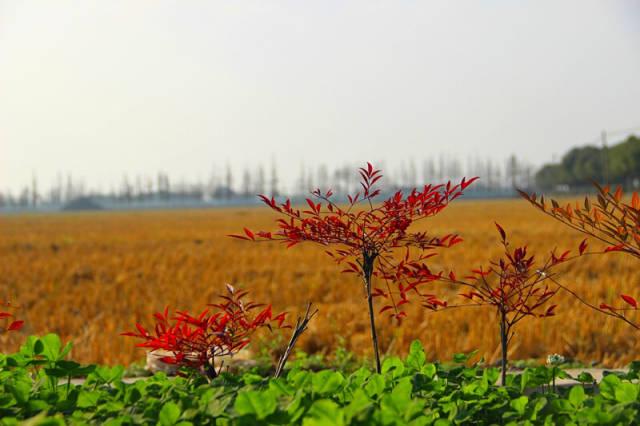 至今才被发现上海有个中国最美乡村 - 听雨心动 - 图文日志·烎