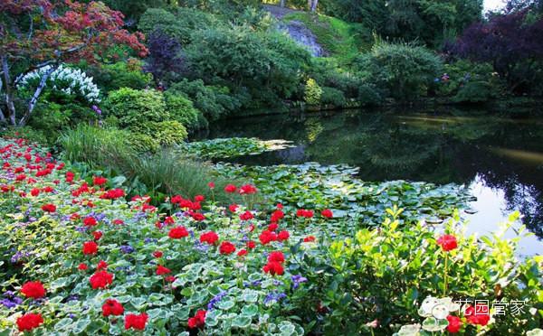 世界上最美的花园 ---加拿大 布查特花园 - 达观明志 - 达观明志 chendmgx