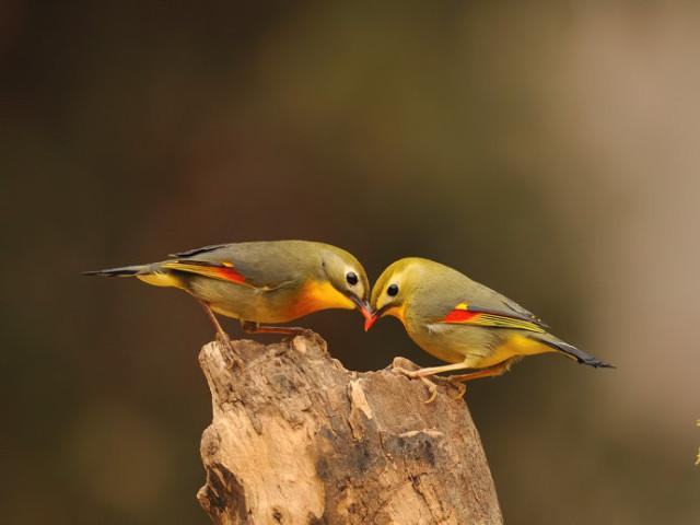 【美图欣赏】自然本性美 - 南飞雁 - 南飞雁,雁南飞,燕叫声声盼春归。
