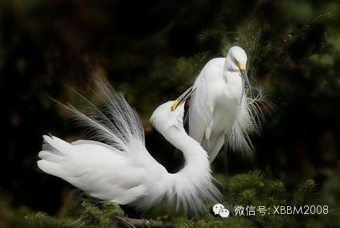 白衣仙子下凡 - 快乐者 快乐着 - shangshanruoshui的博客