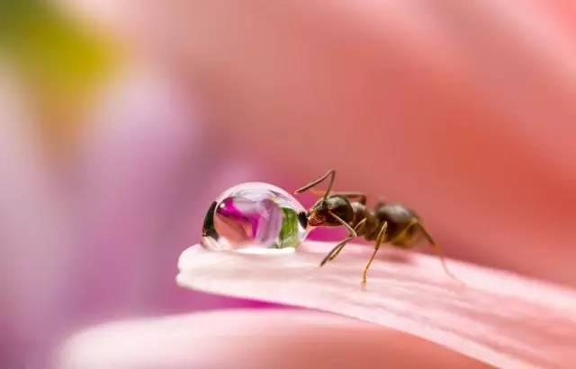 14张高清微距摄影下的蚂蚁,很小但很美【网络资料的改编】 - 孺子牛 - 年轮兮老者、博客矣犊仔