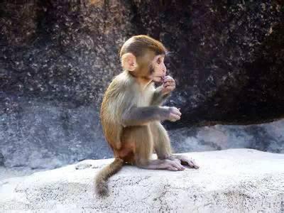 一只老猴子说的话,太经典了!!!