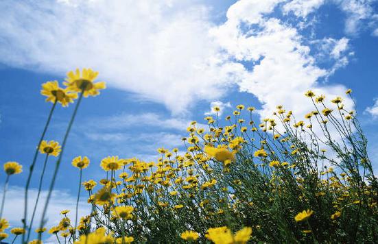 生命经不起等待,请微笑一直向前 - 春夏秋冬 - 春夏秋冬 的博客