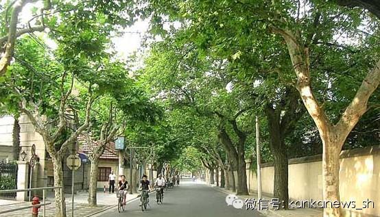 """其实,上海最标志的,不是东方明珠,不是南京路,而是""""法国梧桐"""" - Luca_Huang - 忙里偷闲"""