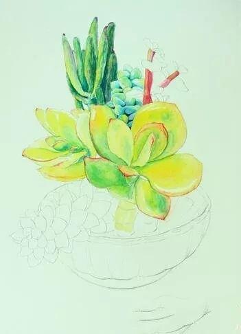 多肉植物水彩画教程详解图片
