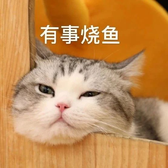 猫猫_沙雕表情bot