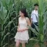 搞笑农村:两口子地里<<亲个嘴>>,笑死人不偿命!!