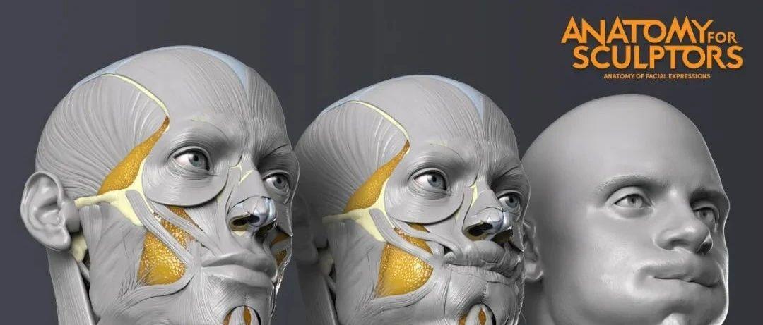 教练!我想学人体结构!!!(内含100+结构分析图,Anatomy最新头颈结构)