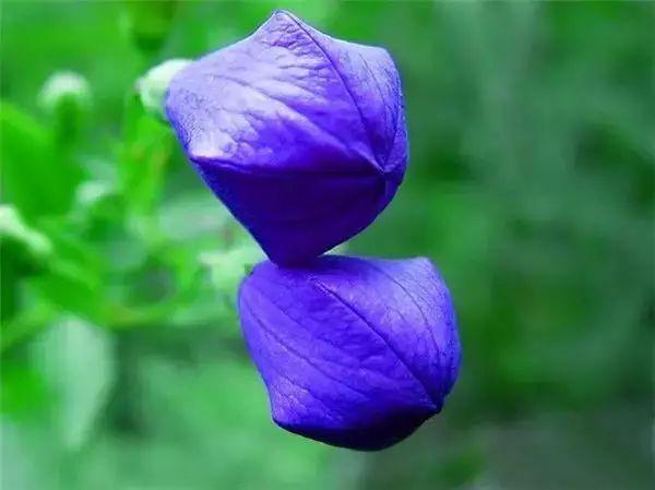 罕见奇花!花如其名!