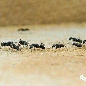 家中有蚂蚁怎么办_每天生活小妙招