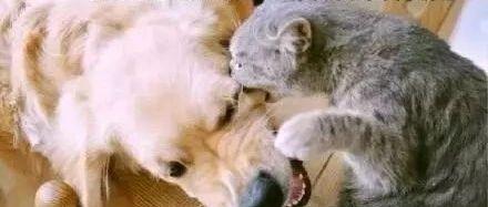 猫和狗之间,到底是种什么神仙情谊?