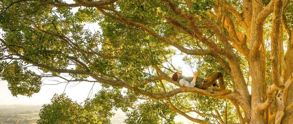 给树看病的医生,却被树治愈了一生