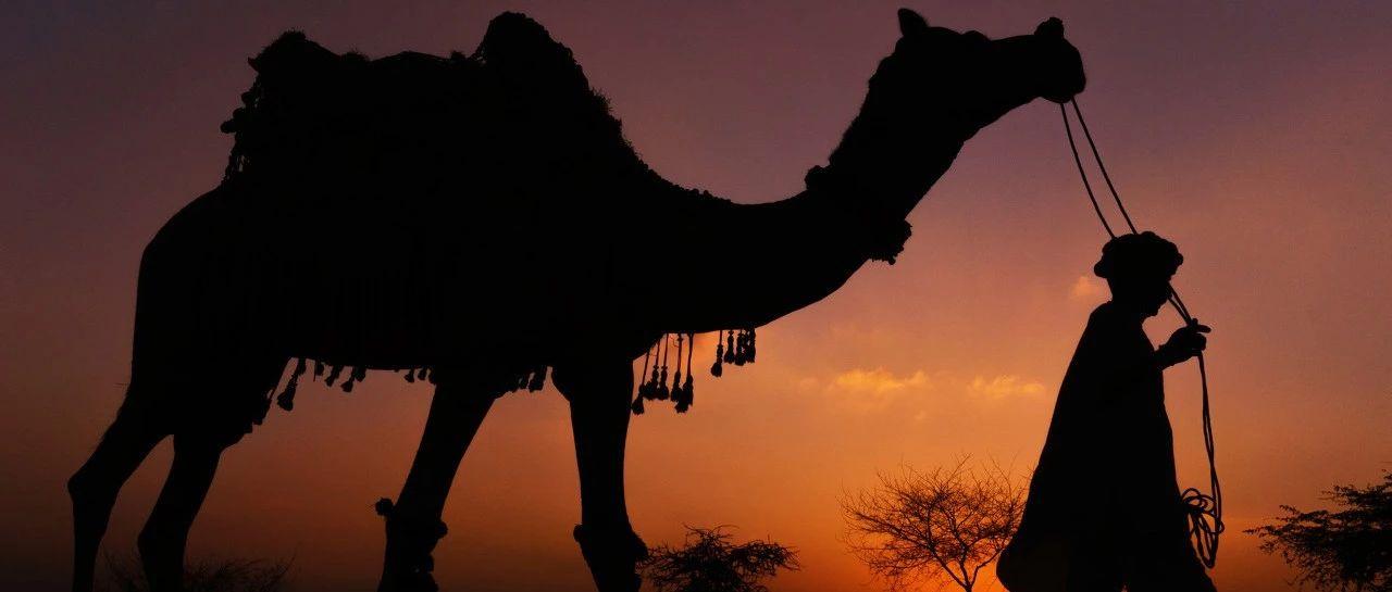 返老还童的骆驼奶?你知道喝骆驼奶的国家人均寿命才多少吗?