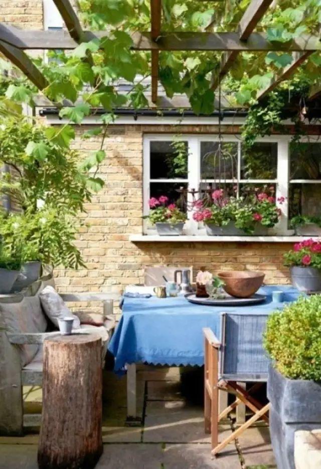 花事 | 老来有个小院,手捧闲书,赏花喝茶!