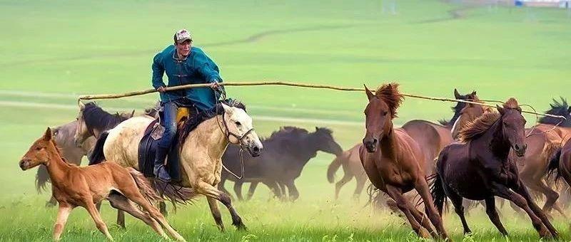 好好的马你套它干什么?