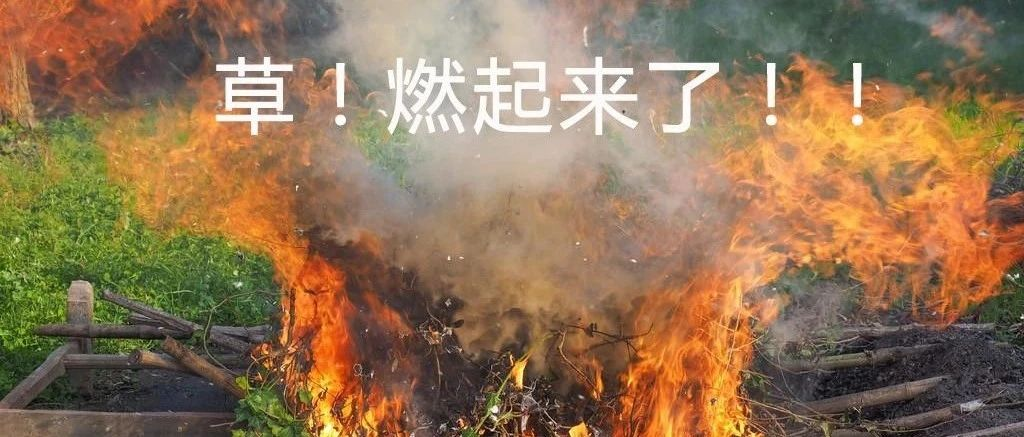 草,燃起来了!我手里有个大虫子