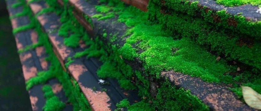打造一个青翠欲滴的苔藓小世界