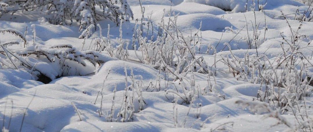 冬天虽然很冷,但虫子可能比你还抗冻