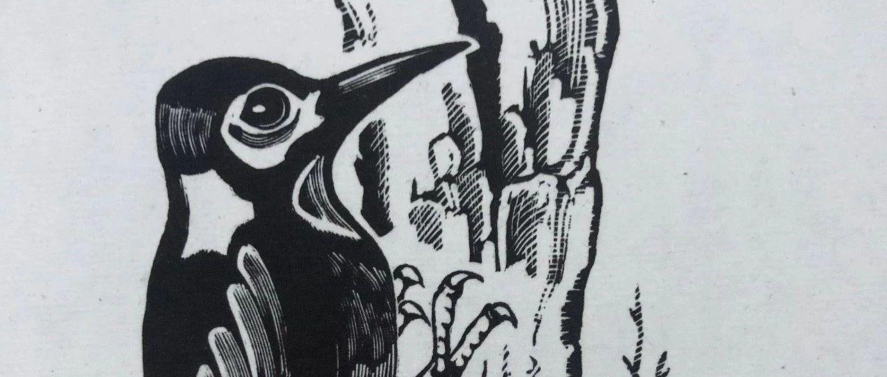 版画先驱丨刘岘:辛勤劳作的啄木鸟
