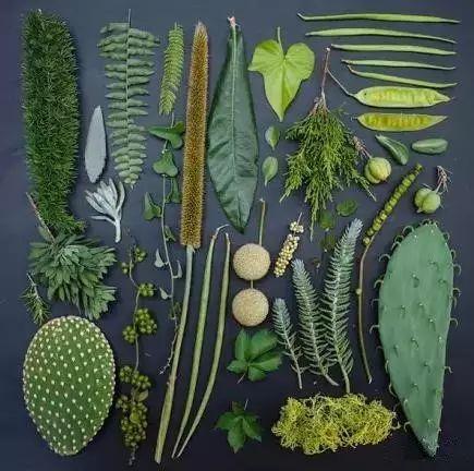史上最全的植物形态图解,教你分分钟认识所有植物!