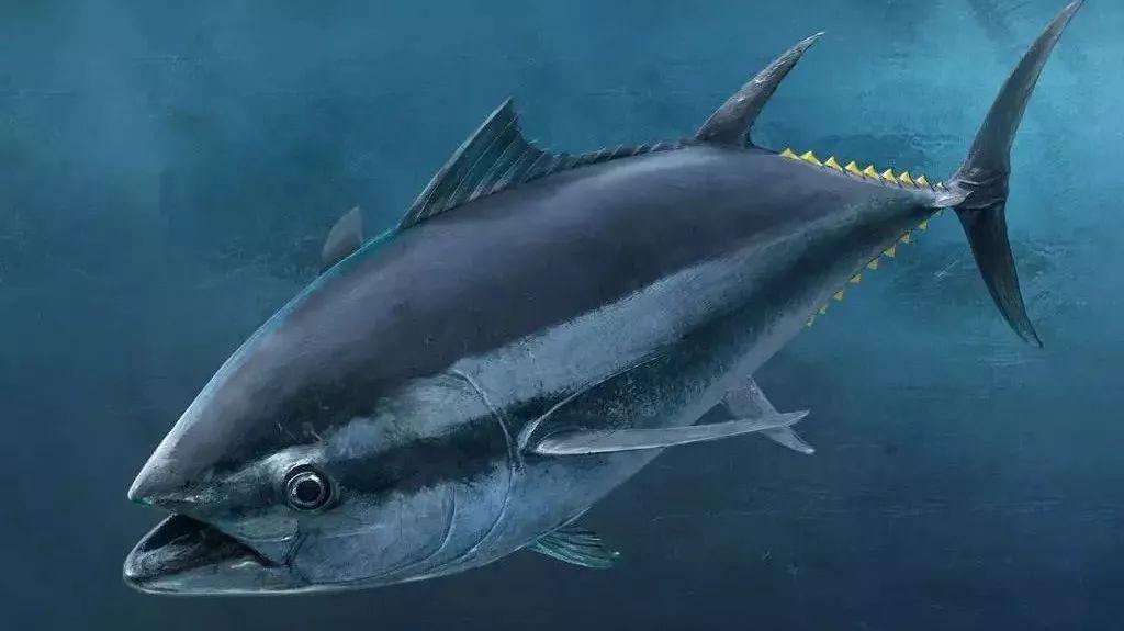 你知道咸鱼表情包里的那只,到底是什么鱼吗?