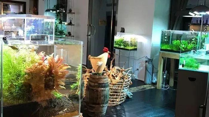 意大利的环境超好的概念水族店