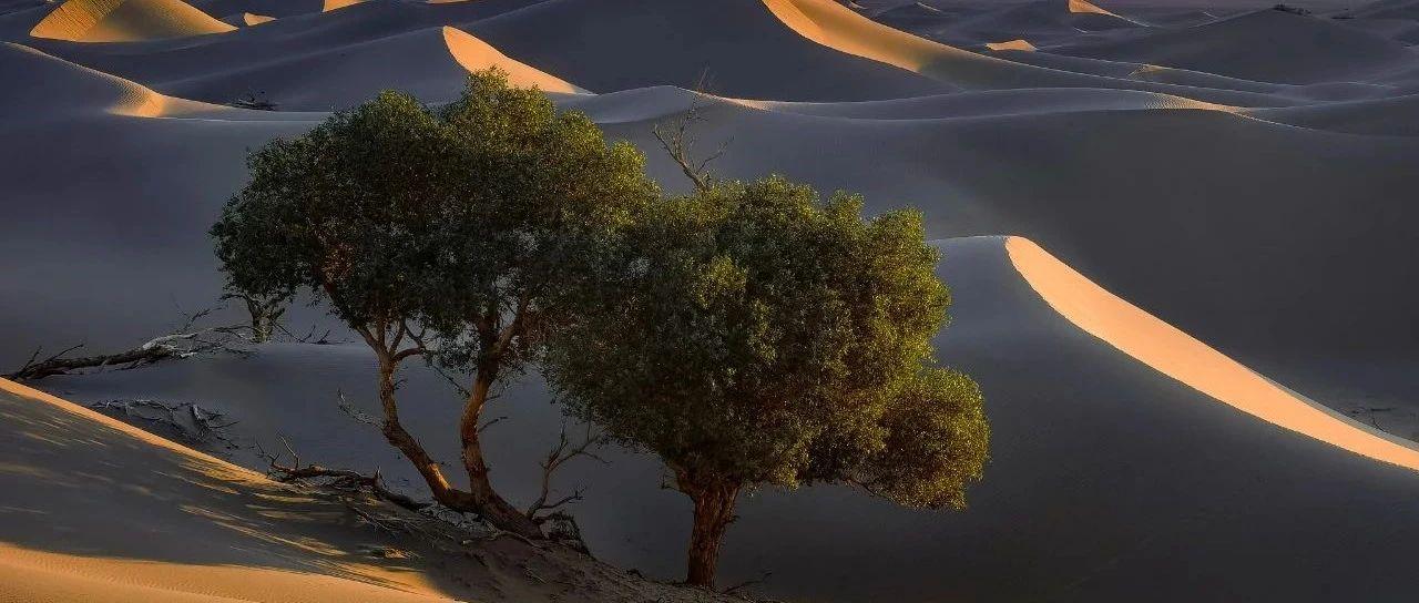 HUAWEI Mate 40系列镜头下的沙漠传奇