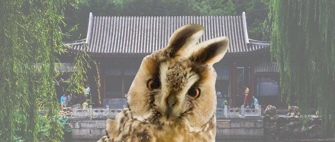 千万人口的大都市还有好多猫头鹰?这事在北京曾经存在过
