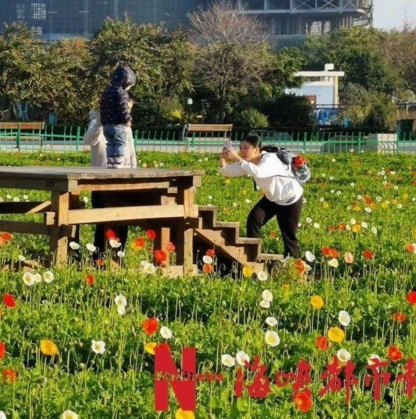 新鲜出炉!福州春节赏花地图,您收好!