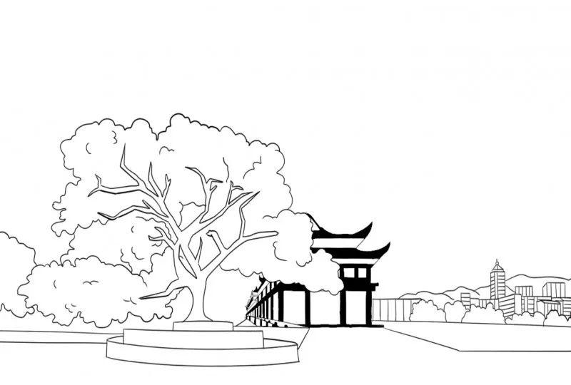 """选出心目中的""""男神"""",""""女神""""   黄葛树 ,桂花树,银杏树   """"市树""""一组"""