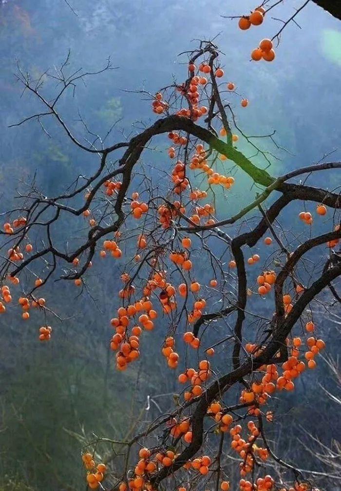 微信树形结构图