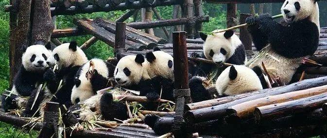 警惕!成都大熊猫基地严正声明