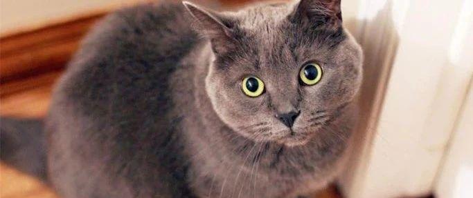 看到自家猫在外玩,抱回后发现,猫一直在家!