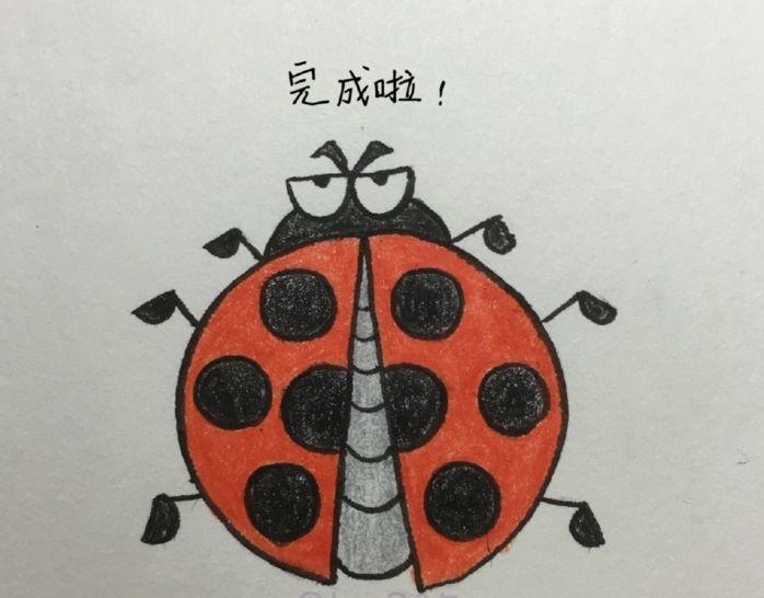 昆虫简笔画 | 七星瓢虫的画法教程,一步步教大家画