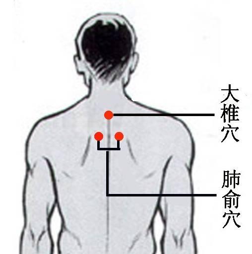 肺的经气在背后有一个最大的聚集