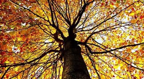 男人是棵樹,女人是個家,樹常青,家才旺 !