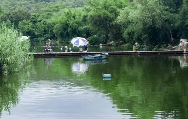 杭州一老板挖個魚塘,讓用戶免費釣魚,結果所有人都驚呆了……