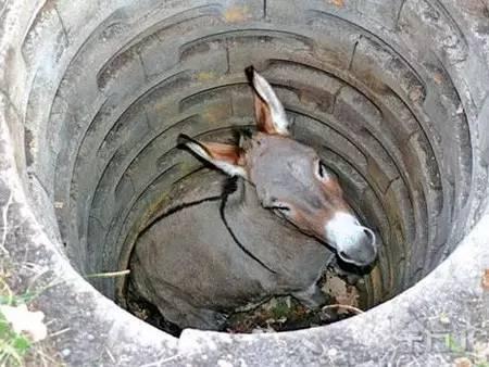 當你鬱悶的時候,看看這頭犟驢!