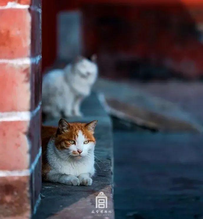 """陈独秀本秀!兵哥哥把田园猫训成了全网第一只""""特种猫""""!"""