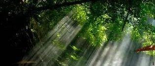 雨村笔记 庭院篇 第十章 竹林灯会