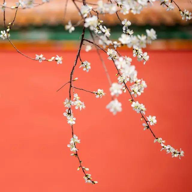 中国最美的颜色在紫禁城【赞那度分享】